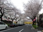 中野通りサクラと西武新宿線